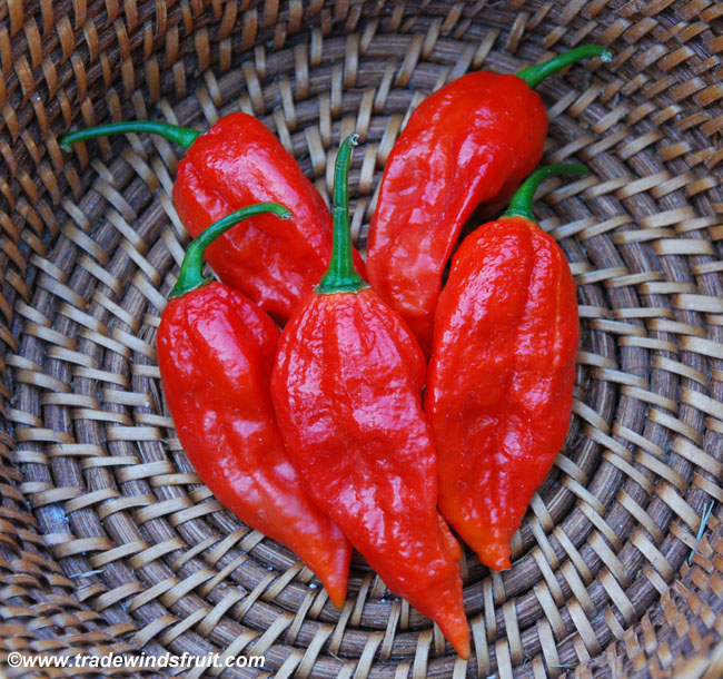 Buy Bhut Jolokia Pepper Bhut Jolokia Pepper Ghost