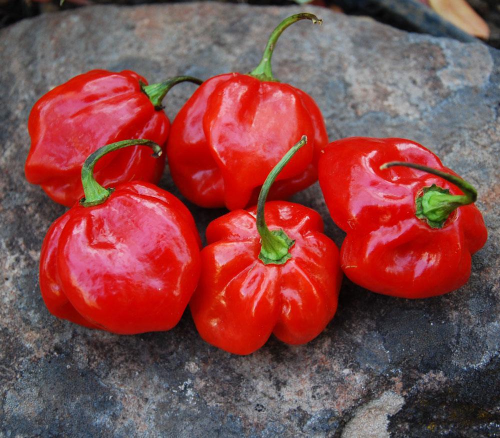 Congo Trinidad Pepper Seeds