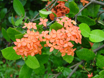 flowers fruits and plants of hawaii